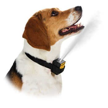 Training With The Dog Bark Collar