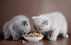 Which Foods Can Cats Eat?