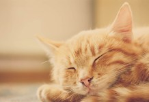Cystaid Plus for cats
