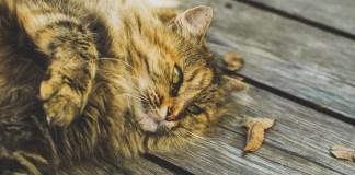 FeliSafe cat fencing