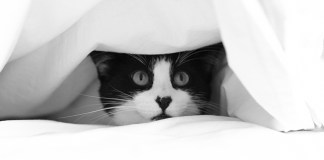 3 easy ways to train a scaredy cat