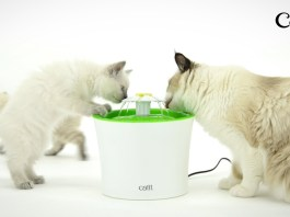 5 of the best pet fountains for cats