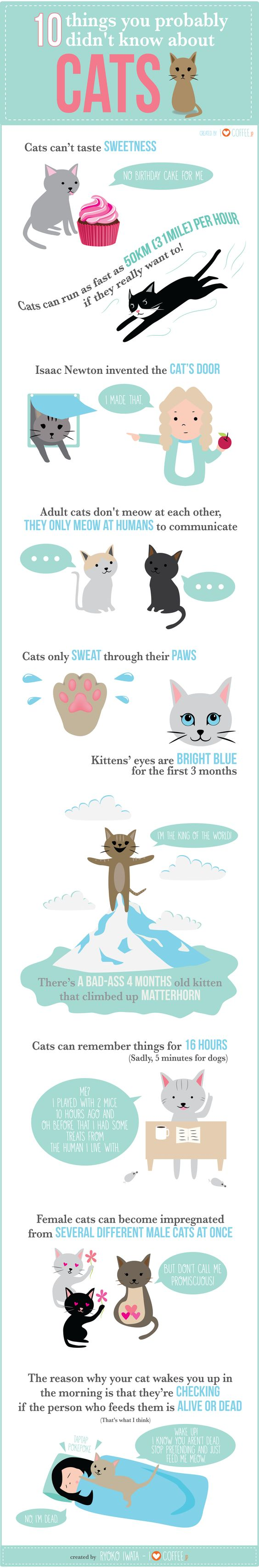 10 things your probably didn't know about cats: cat infographics