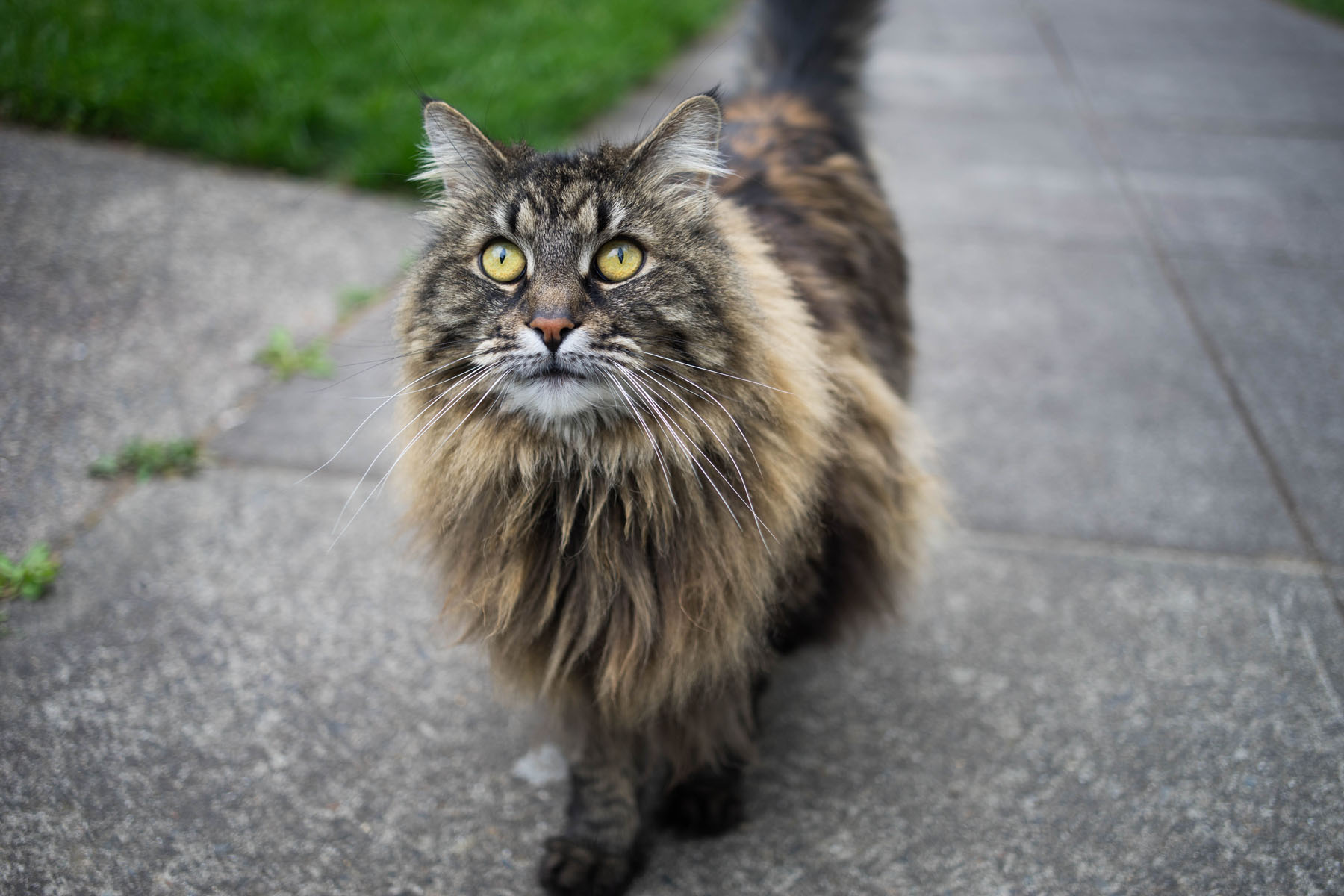 Best Pet Insurance for Cats 2016