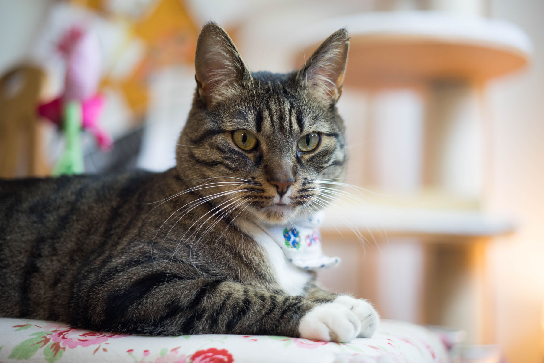 Good deal: Amazon Pet Festival deals for cat owners
