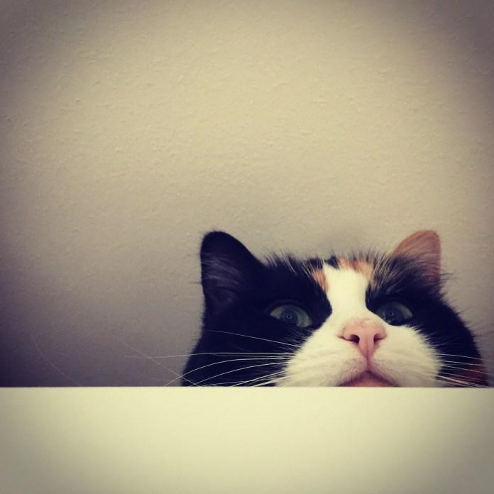 Best For Cats Newsletter