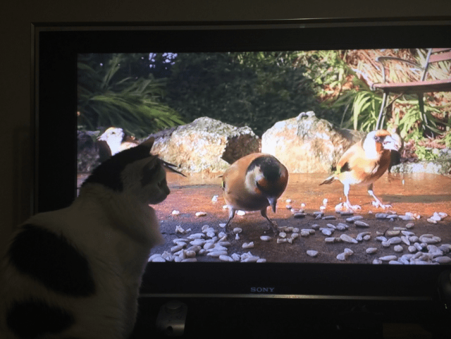 These videos will keep your indoor cats entertained!