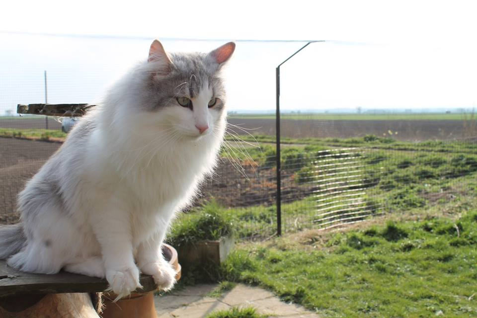 Guest Post Keeping Cats Safe Outdoors Best For Cats