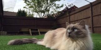 Keeping Cats Safe Outdoors