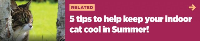 Keep cats cool in summer — 5 great tips