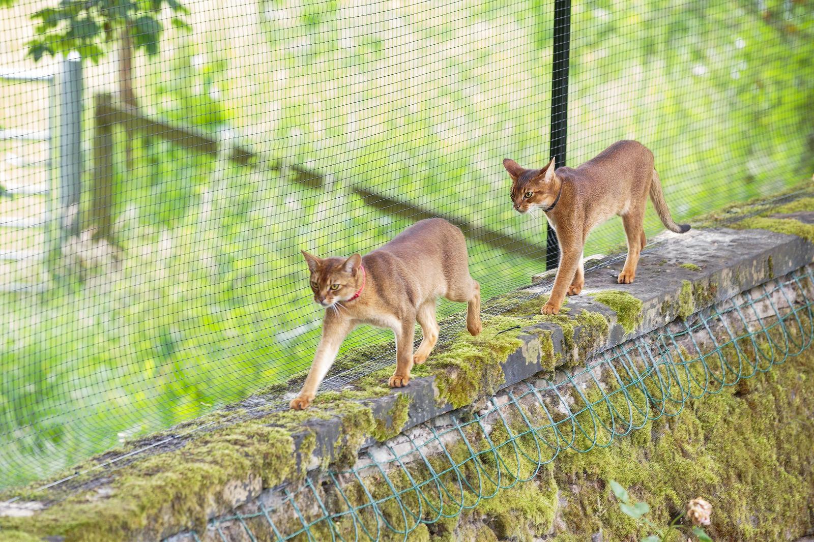 Freestanding Cat Enclosure