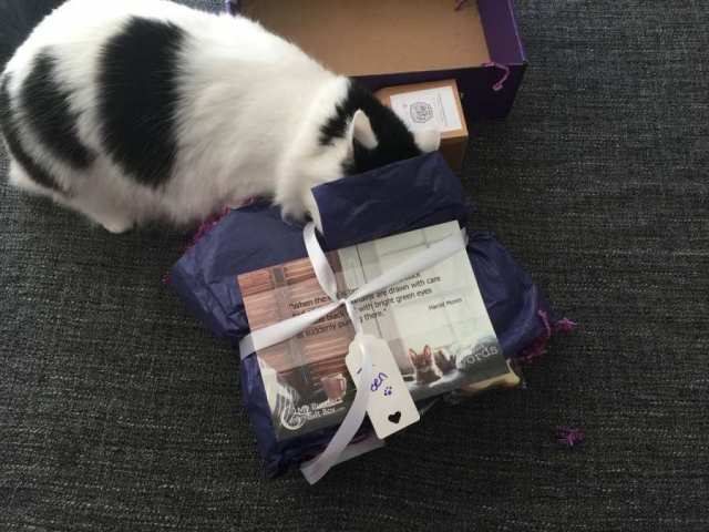 Alf having a nose in the My Purrfect Gift Box