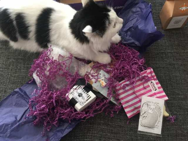Alf claims the My Purrfect Gift Box