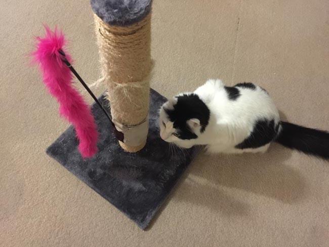 valerian cat toys