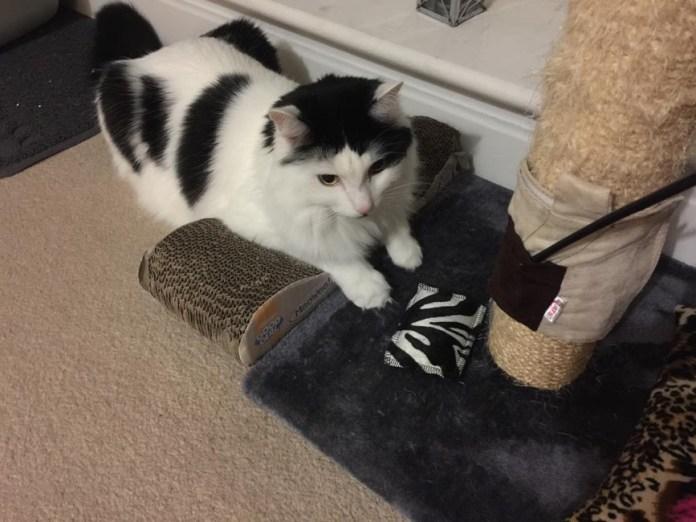 4cats valerian cat toys