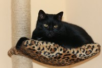 Stop Your Cat Scratching Furniture - Best For My Pets