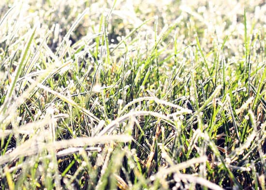 Will Frost Damage Freshly Cut Grass?
