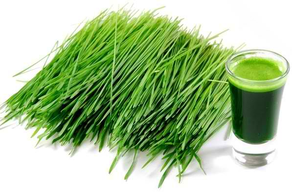 Barley Grass can Fight Cancer Faster