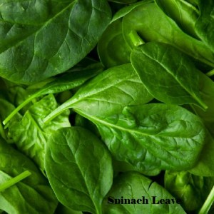 Green spinach leave in Nigeria