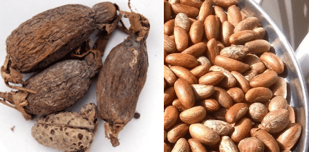 Health Benefits of Bitter Kola and Alligator pepper