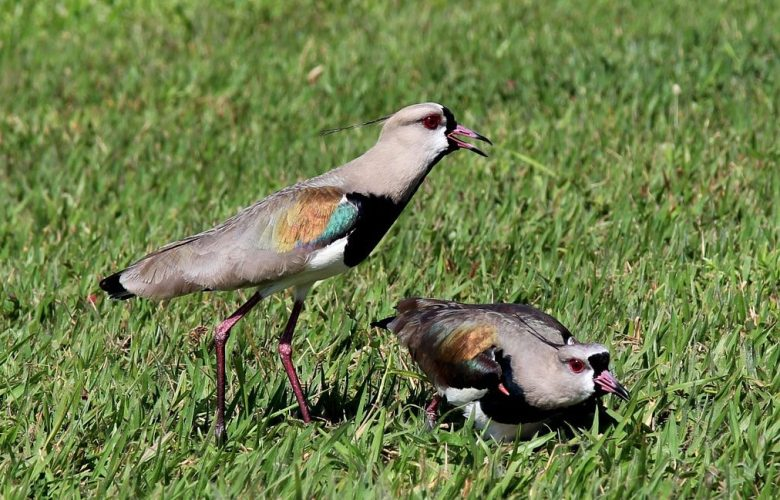 How to keep birds from eating grass seed | Best Home Gear