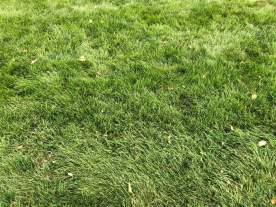 Keep your grass as luscious as this while keeping the birds away!