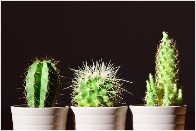 How to Care for Cactus and Succulents 2019