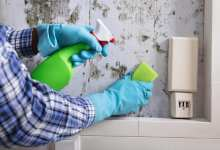 Photo of How To Remove Mold From Wood & Drywall – Mold Remediation