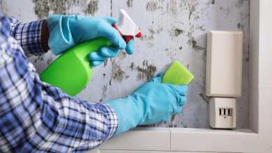 how to remove mold - Best Home Gear