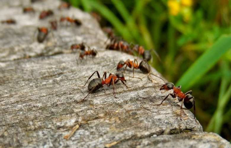 How to get rid of ants | Best Home Gear