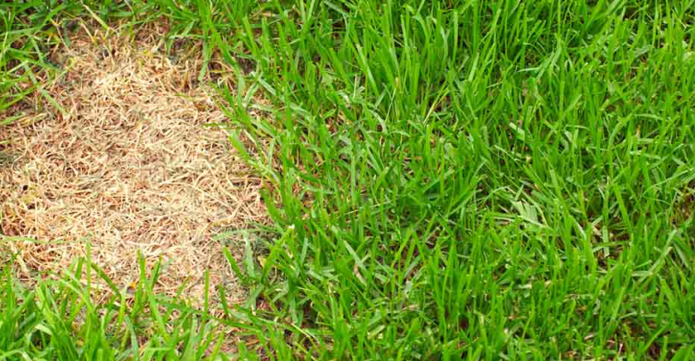 Photo of How To Plant Grass Seed In Bare Spots