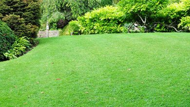 How to Grow grass Fast | Best Home Gear