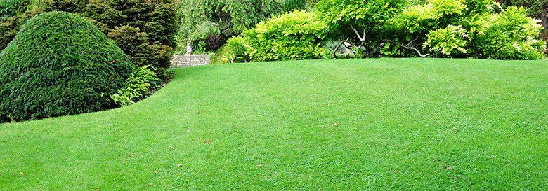 How to Grow grass Fast | Best Home Gear