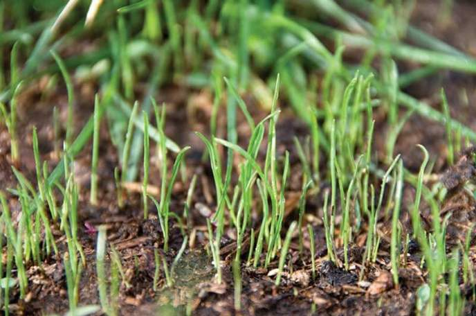 grass germination | Best Home Gear