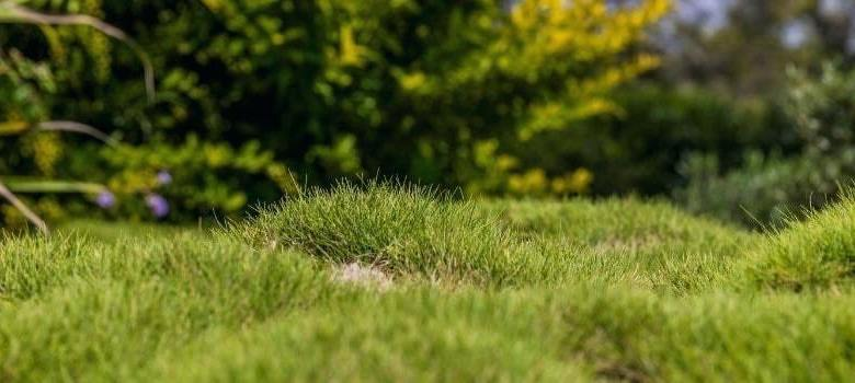 How To FIx a Bumpy Lawn | Best Home Gear