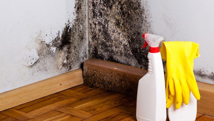 Spraying Mold Killer - Best Home Gear