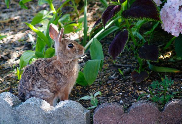 animals eating garden plants - best home gear