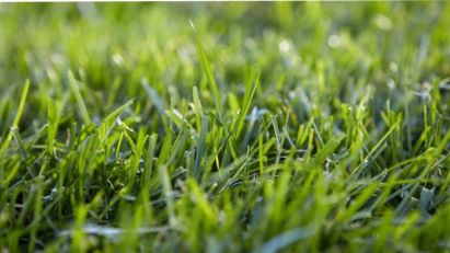 photo real grass lawn - best home gear