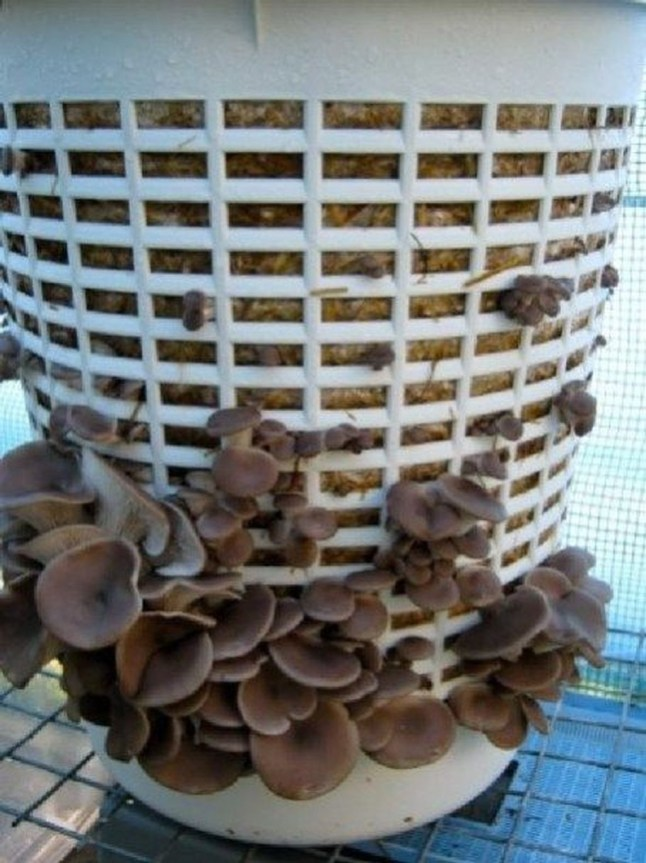 Diy Garden Mushrooms Design09