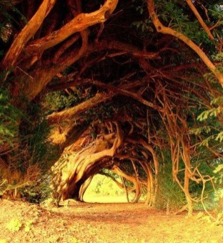 Incredibly Magical Tree Tunnels Worldwide You Must Walk Through Them13