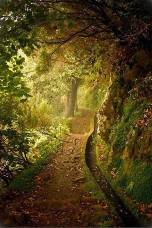 Incredibly Magical Tree Tunnels Worldwide You Must Walk Through Them20