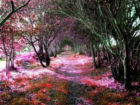 Incredibly Magical Tree Tunnels Worldwide You Must Walk Through Them22