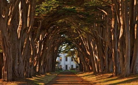 Incredibly Magical Tree Tunnels Worldwide You Must Walk Through Them28