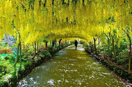 Incredibly Magical Tree Tunnels Worldwide You Must Walk Through Them29