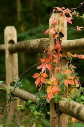 Helpful Tips For Autumn Update Of Your Garden09