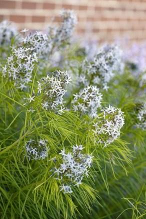 Helpful Tips For Autumn Update Of Your Garden18