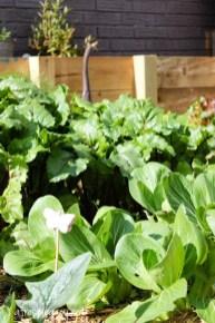 Helpful Tips For Autumn Update Of Your Garden20