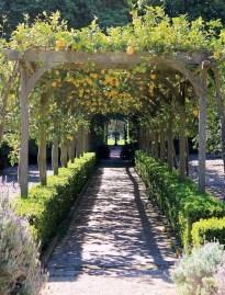 Ideas For Your Garden From The Mediterranean Landscape Design41