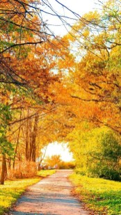Soothing Autumn Landscape Ideas For This Season13