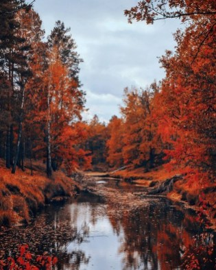 Soothing Autumn Landscape Ideas For This Season17